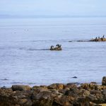 Cormorants on offshore rocks